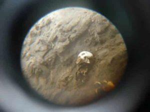 momia-chile1-e1401140302633