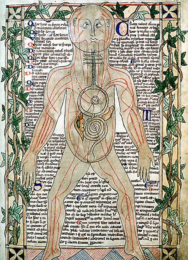 La anatomía humana en la Edad Media – Descubrir la Historia