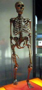 Esqueleto de Homo Sapiens Neanderthalensis