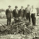 Confiscación de pipas de opio en Hawái a principios del siglo XX
